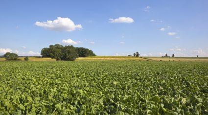 The beet is on, fundraising under way for Irish bioethanol hub