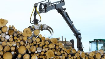 Latest Irish forestry statistics published