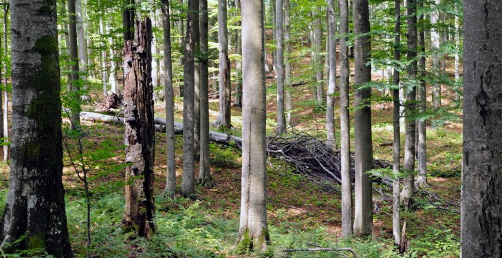 Concern over compulsory purchase of forestry in new laws