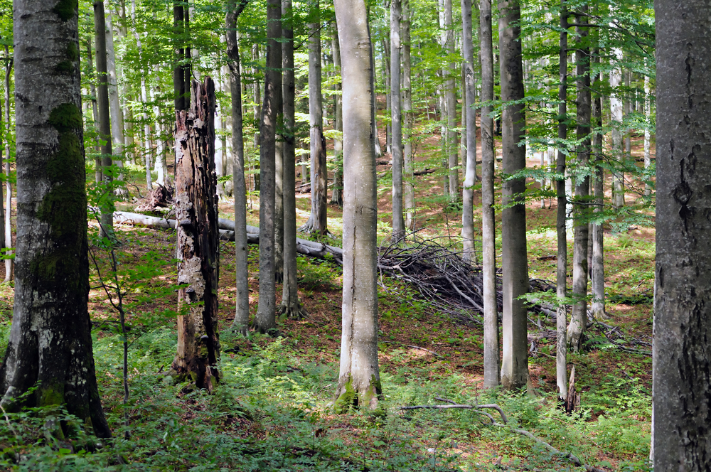 Closure of forestry grant schemes to new applicants