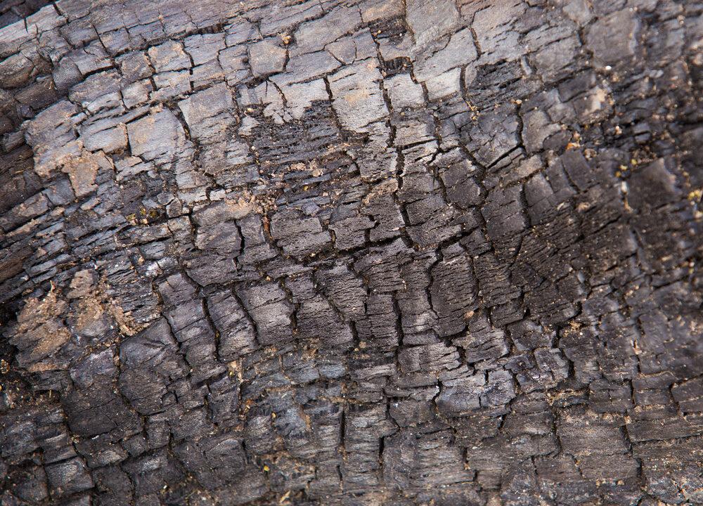 96 ash dieback outbreaks
