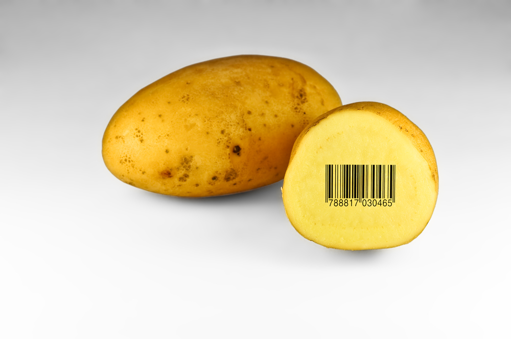 Teagasc GM potato research not affected by EU national opt-outs
