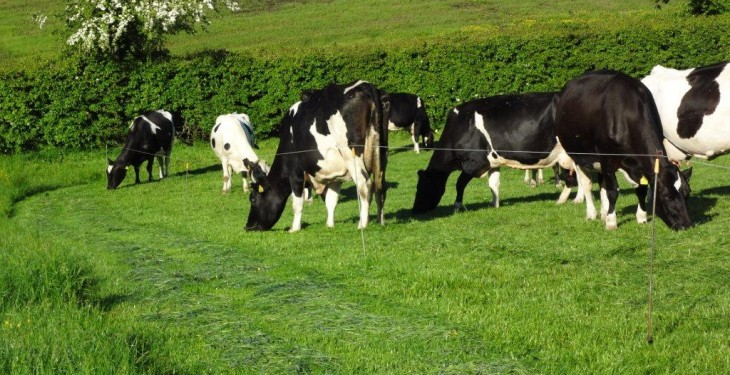 Dairy herd increased by just 1% last year