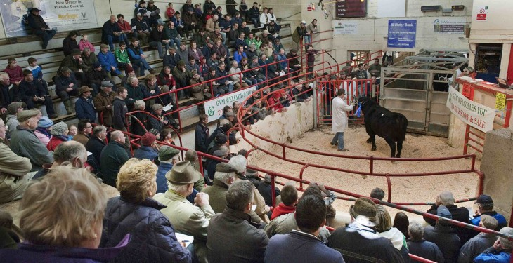 Strong weanling trade nationwide