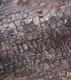 Second hedgerow ash dieback case confirmed