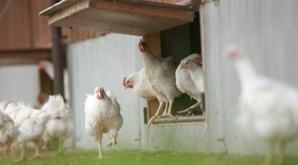 Free range egg producers have been treated despicably