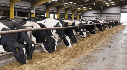 Winter milk producers operating in a capped market in a growing industry