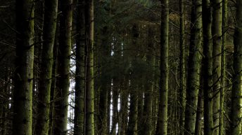 Guide to grants and funding available to those with forestry