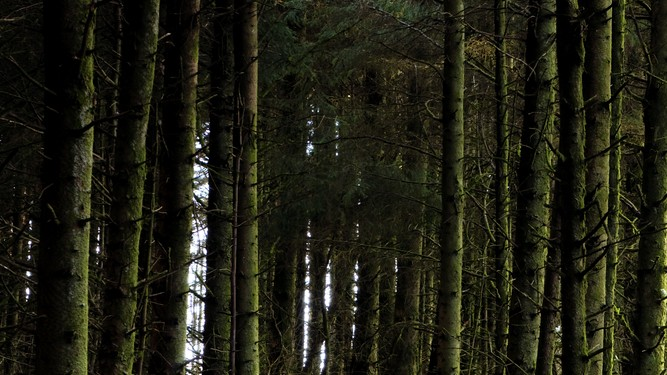 Ireland's forestry to be evaluated