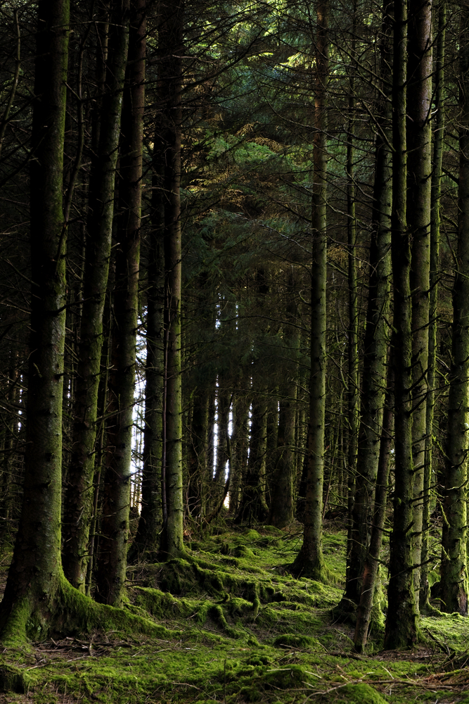 Forestry thinning 'a crop management activity – not a profit earner'