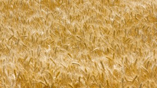 Could Ukraine hold the key to competitive feed prices across Ireland?