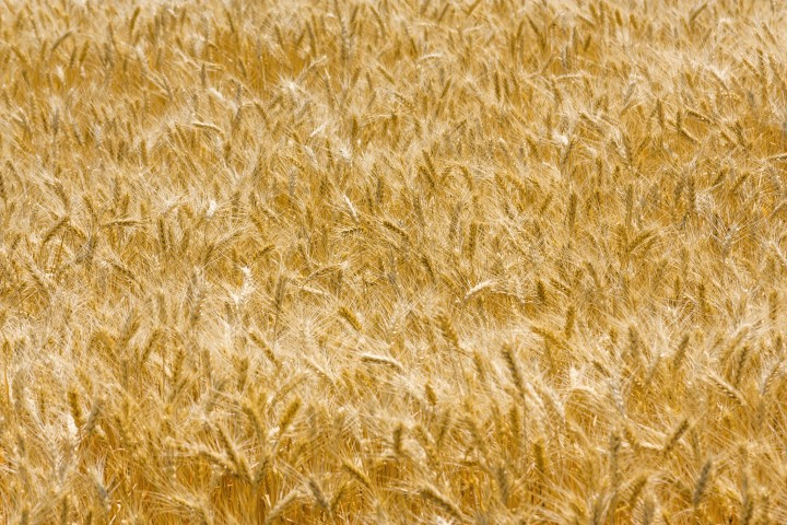 Tighter controls of feed suppliers needed, IGFA