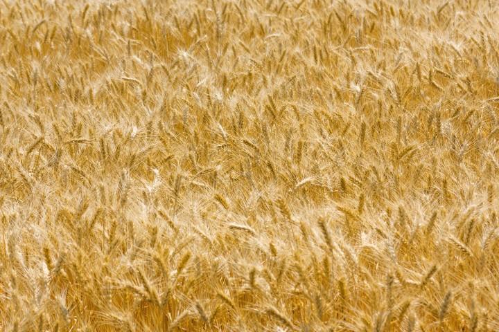 Teagasc plays a key role in international food security