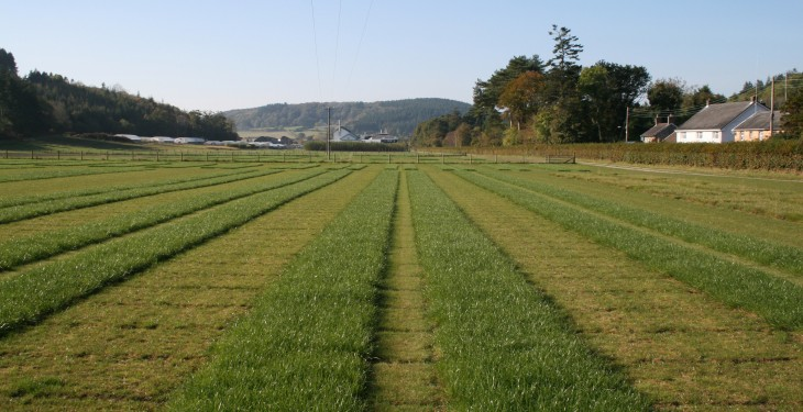 Livestock ryegrass wins research award