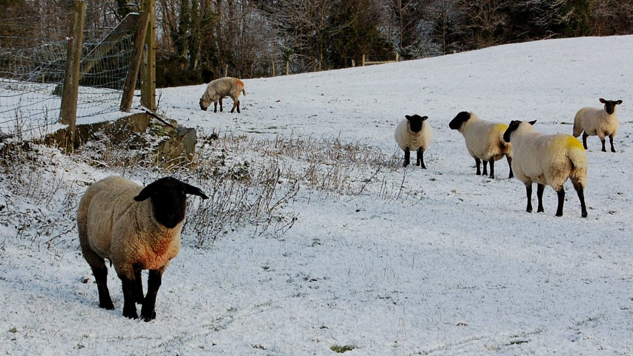 Planning for winter: snow, flooding and fodder