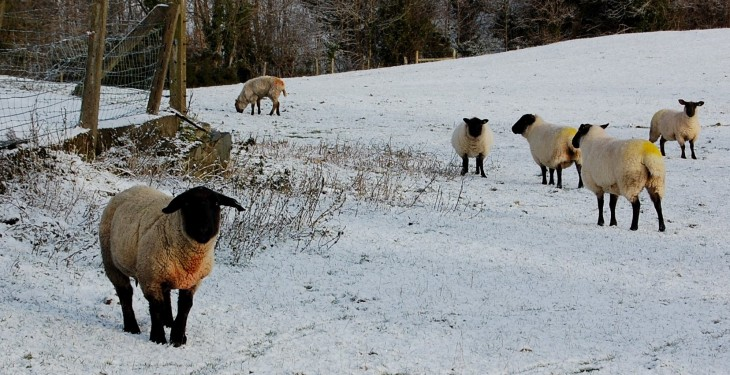 Key advice for livestock farmers in light of Status Red weather warning