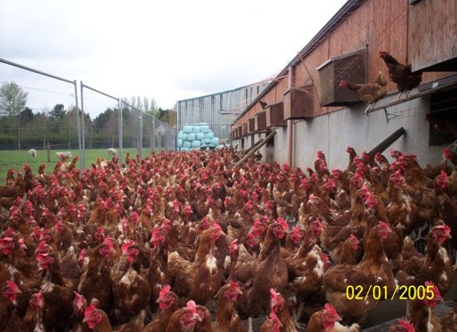 How will Harvest 2020 strategy impact on poultry sector?