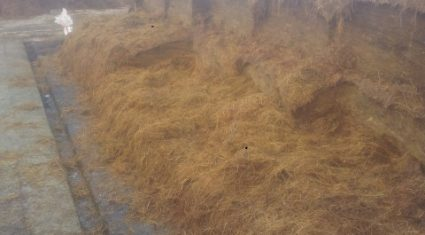 Silage pits open across the country