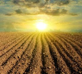 碳中性对许多爱尔兰耕种农民应该是可行的狗威体育app