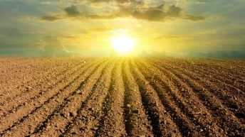 Convergence could render some tillage farms non-viable