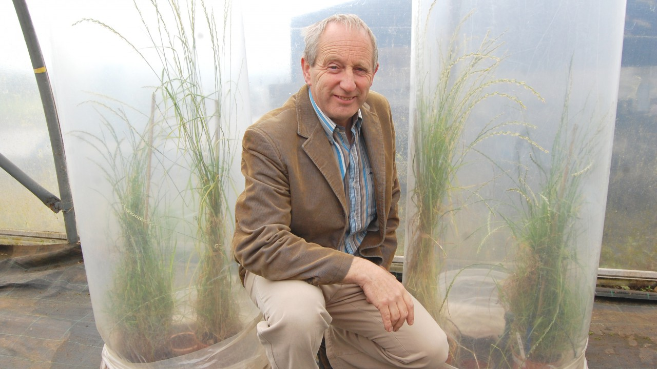 New late diploid ryegrass launched by AFBI