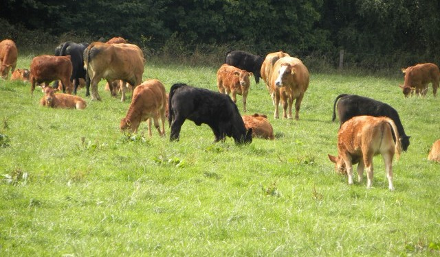 Stolen Cattle returned to Tipp farmer