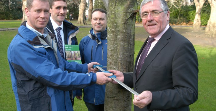 Ireland's forest area stands at 10.5%