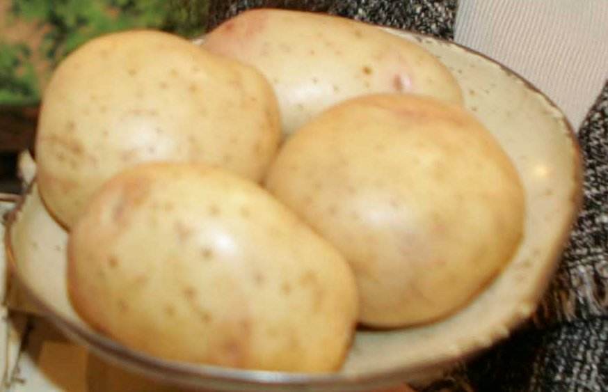 Weather holds up planting of new season potatoes
