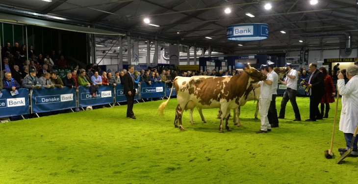 Results are out for Royal Ulster Winter Fair 2013