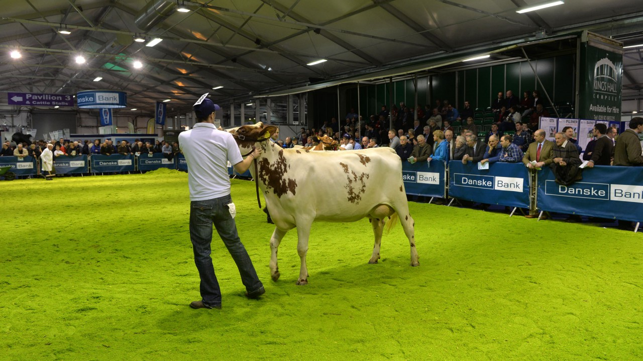Patterson family carries the day at Royal Ulster Winter Fair #winterfair