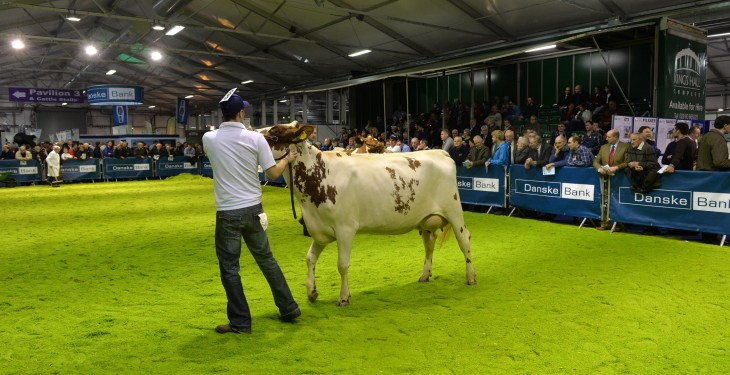 Dairy Spectacular at Omagh Show