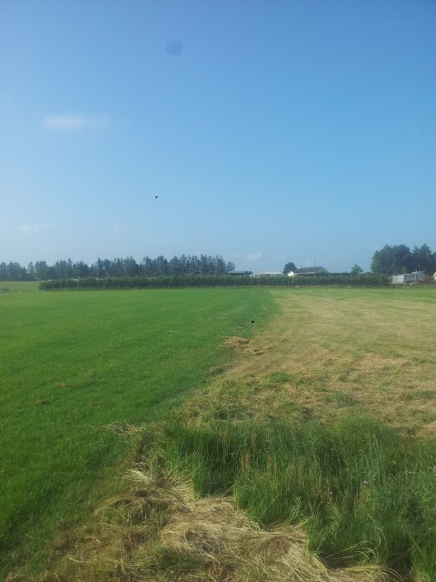 New grass varieties will constitute a 'green' flooding defence