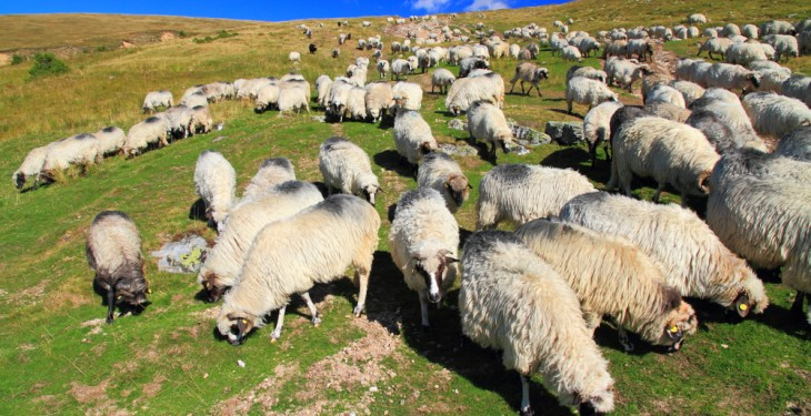 Grassland sheep payments out