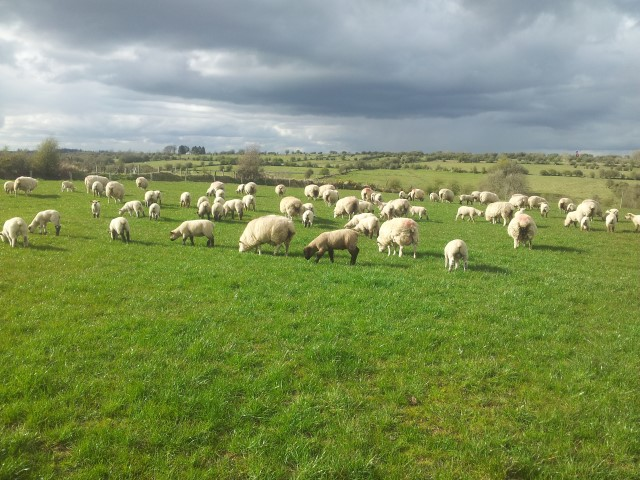 Mixed weather on the way, advice to keep flock in