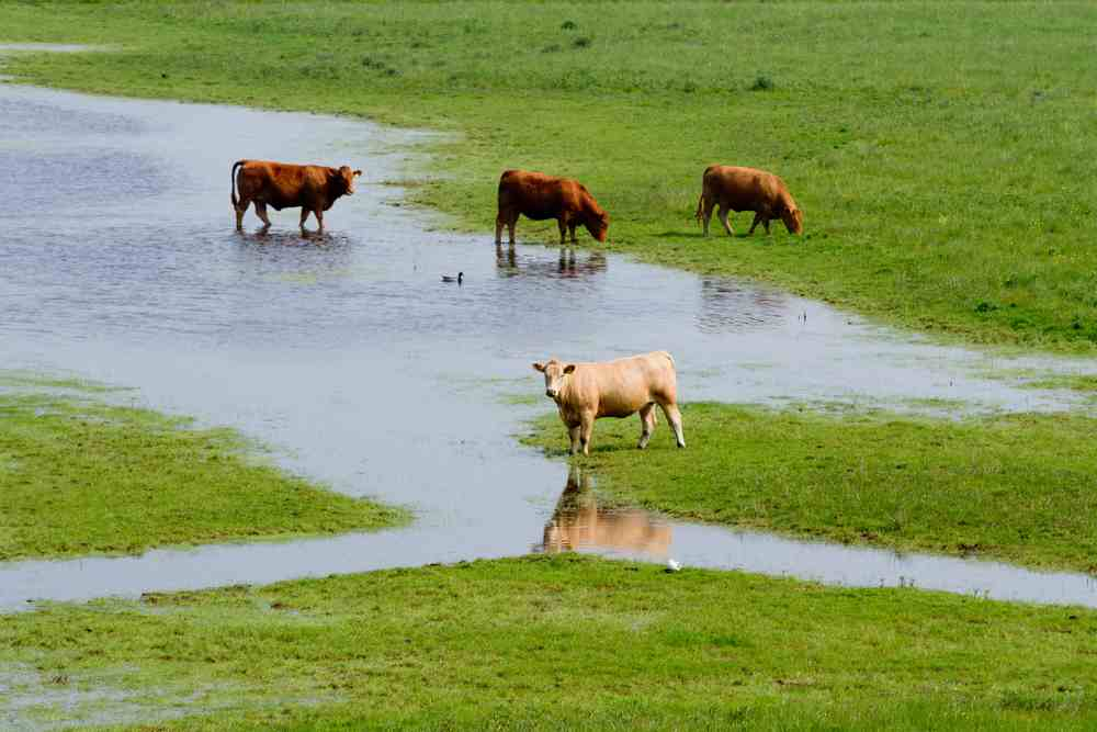 No exemption for farmers on water rates