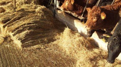 Fodder crisis cost Irish farming €500m, Teagasc