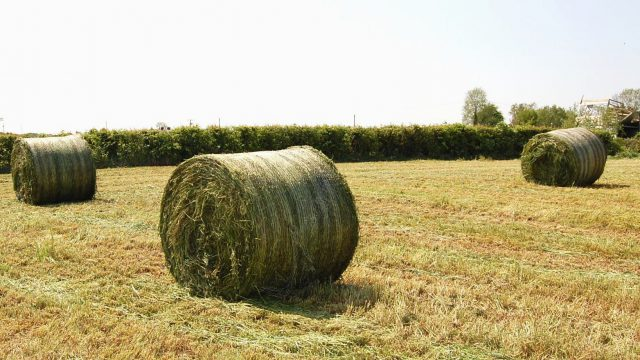 Are you planning on making silage bales this year?