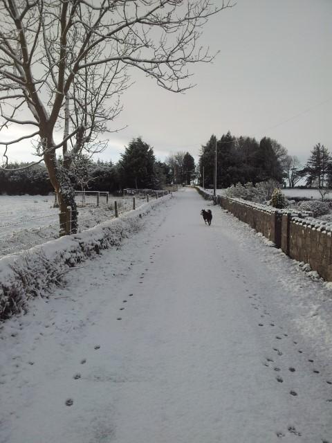Laois farmers could be paid to salt roads this Christmas