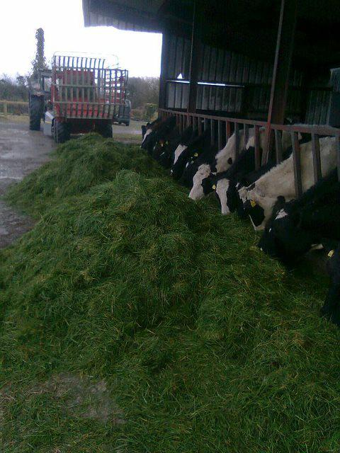 Dairy entrants set to thrive in Mayo