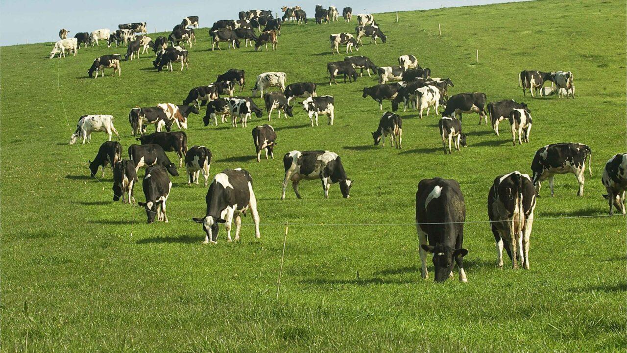 Teagasc advice: get Nitrogen on to grassland now