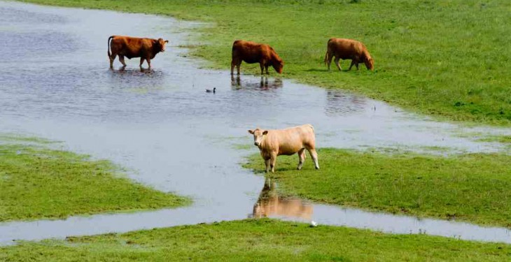 Wettest December in 24 years as weather warning still in place