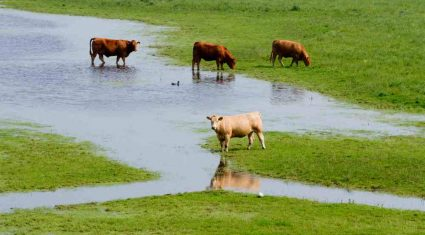 No compensation for farmland flooded under arterial drainage schemes