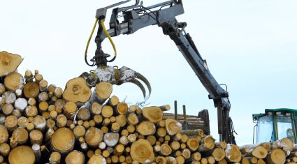 ESB imports 15,000 timber poles a year