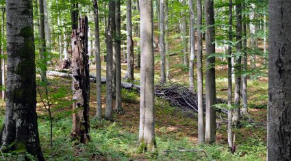 17,000 farmers invest in forestry