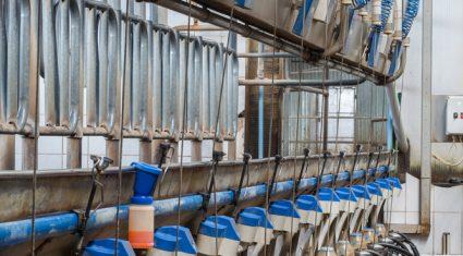 New Zealand's women embrace dairy