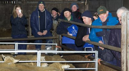 Farmers see sheep equal milk for margins