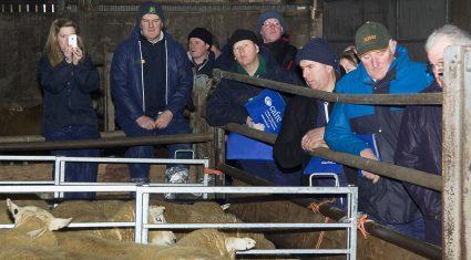 Farmers see sheep equal milk for margins