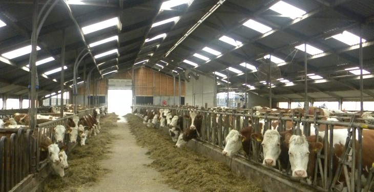 Irish innovations key on Dutch dairy farm