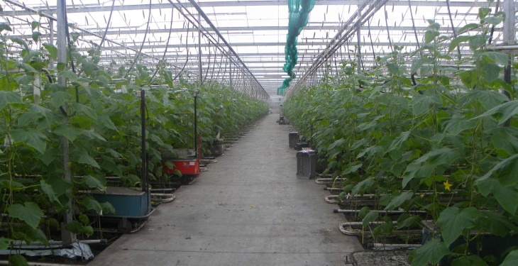 Soil comes first for Dutch greenhouse grower