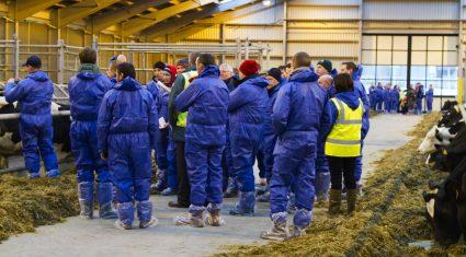 900 farmers attend dairy unit training
